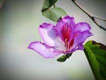 фиолетовый цветок в дереве Стоковая Фотография