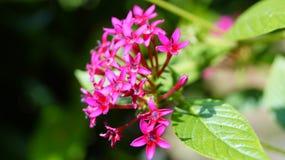 Фиолетовый цветок Керала стоковая фотография