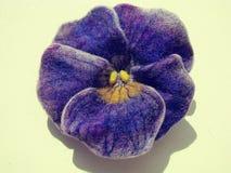 Фиолетовый цветок на белой предпосылке Стоковые Фотографии RF