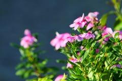 фиолетовый цветок на природе с предпосылкой природы Стоковое фото RF