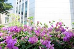 Фиолетовый цветок орнаментального сада Стоковая Фотография
