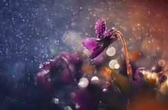 Фиолеты в мадженте Стоковые Фото