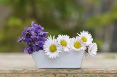 Фиолеты и маргаритки в малой вазе стоковые изображения rf