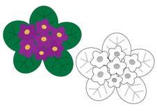 Фиолеты цветут красочное и в белых и черных цветах Стоковое фото RF