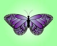 фиолет бабочки Стоковые Изображения