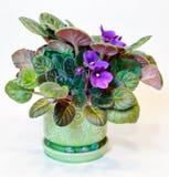 фиолет бака Стоковая Фотография RF