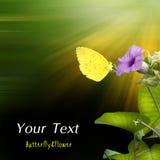 фиолет лимона цветка бабочки эмигрантский Стоковое Изображение RF