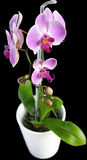 фиолет орхидеи цветка стоковые изображения rf