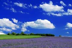 фиолет поля Стоковое Изображение RF