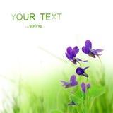 фиолет цветка Стоковое фото RF
