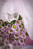 фиолет hrisantema стоковые фотографии rf