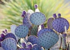 Фиолетовая груша n зеленая шиповатая Стоковое Изображение