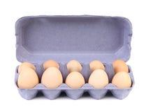 Фиолетовая коробка яичка картона с 10 коричневыми яичками Стоковое фото RF