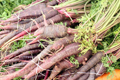 Фиолетовая морковь Стоковое Изображение