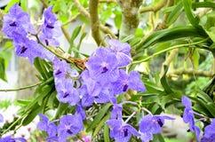 Фиолетовая орхидея Стоковое Фото