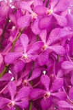 Фиолетовая предпосылка свежего цветка орхидеи Стоковые Изображения