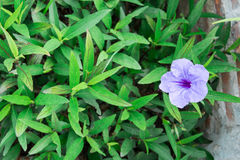 Фиолетовая природа предпосылки зеленого цвета цветка Стоковые Фотографии RF