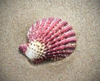 Фиолетовая раковина в песке пляжа Стоковые Фото