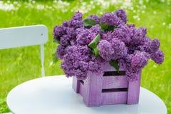 Фиолетовая сирень стоковое изображение