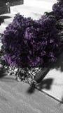 Фиолетовая слава Стоковое Изображение RF