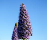 Фиолетовая форма конуса цветка, предпосылка голубого неба Стоковое Изображение RF