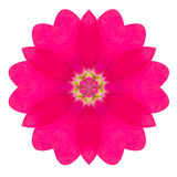 Фиолетовая Kaleidoscopic мандала цветка первоцвета изолированная на белизне Стоковое Изображение