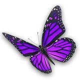 Фиолетовое летание бабочки стоковое изображение rf