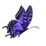 Фиолетовое летание бабочки стоковое изображение