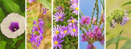 Фиолетовое знамя цветка Стоковое фото RF