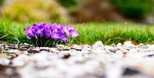 Фиолетовое красочное цветение Стоковое фото RF