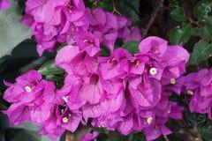 Фиолетовое цветорасположение лист Стоковые Изображения