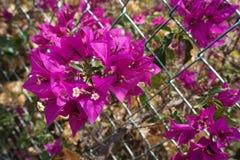 Фиолетовое цветорасположение с цветками Стоковые Изображения RF