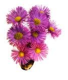 Фиолетовое flw Стоковое Изображение RF