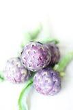 Фиолетовые артишоки на ясной фокусе выбранном предпосылкой Стоковое Изображение