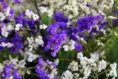 Фиолетовые и белые цветки в букете на рынке Стоковые Изображения