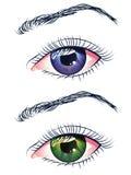 Фиолетовые и зеленые глаза Стоковое Изображение RF