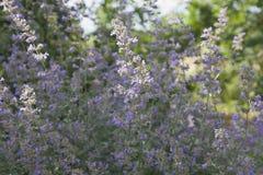 Фиолетовые малые цветки Стоковое фото RF