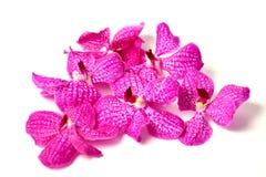 Фиолетовые орхидеи на изолированной предпосылке Стоковая Фотография RF