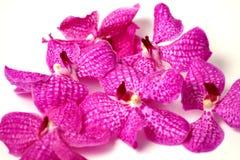 Фиолетовые орхидеи на изолированной предпосылке Стоковое фото RF