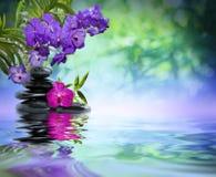 Фиолетовые орхидеи, черные камни Стоковые Фотографии RF
