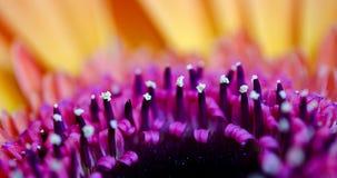 Фиолетовые стержни Стоковая Фотография