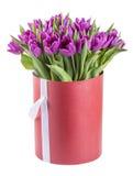 Фиолетовые тюльпаны в шляпе кладут в коробку, изолированный на белой предпосылке Стоковое фото RF