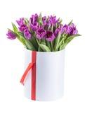 Фиолетовые тюльпаны в шляпе кладут в коробку, изолированный на белой предпосылке Стоковое Изображение
