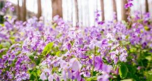 Фиолетовые фиолетовые цветки Стоковые Фото