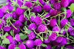 Фиолетовые хризантемы в букетах на рынке цветка Стоковая Фотография