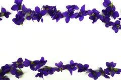 Фиолетовые цветки весны Стоковая Фотография