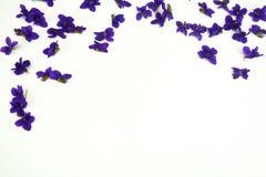 Фиолетовые цветки весны Стоковая Фотография RF