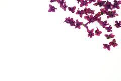 Фиолетовые цветки весны Стоковое Изображение RF