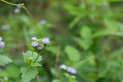 Фиолетовые цветки в зеленой естественной предпосылке заусенца Стоковые Изображения
