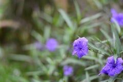 Фиолетовые цветки в зеленом саде Стоковое Изображение RF